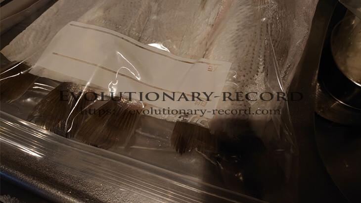 袋を真空状態にした魚の保存状況(イシモチ)